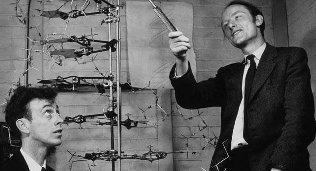 Watson y Crick con su modelo de adn hecho en metal