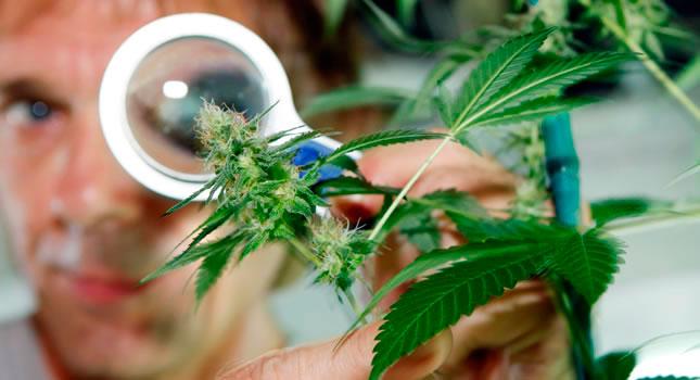 Los efectos de la marihuana sobre la salud son muy conocidos