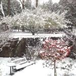 November 2014 snow