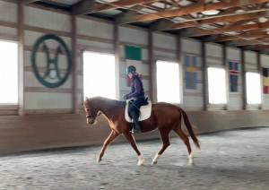 dressage - hanoverian - mare - horse - chestnut
