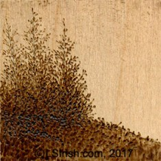 Creating pyrography wood burned landscapes by L S Irish