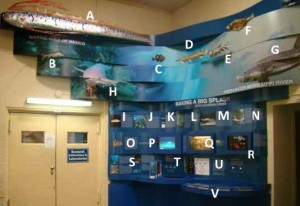 photo: fish exhibit
