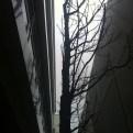 Armer Baum