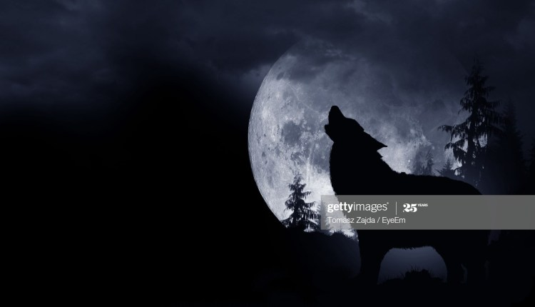 wolves image 3