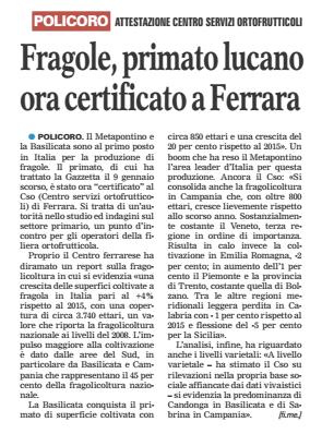 fragole gazzetta 25 02 2016
