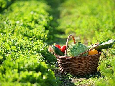 BRAIA: RILEVAZIONE ISTAT STRUTTURA E PRODUZIONI AZIENDE AGRICOLE