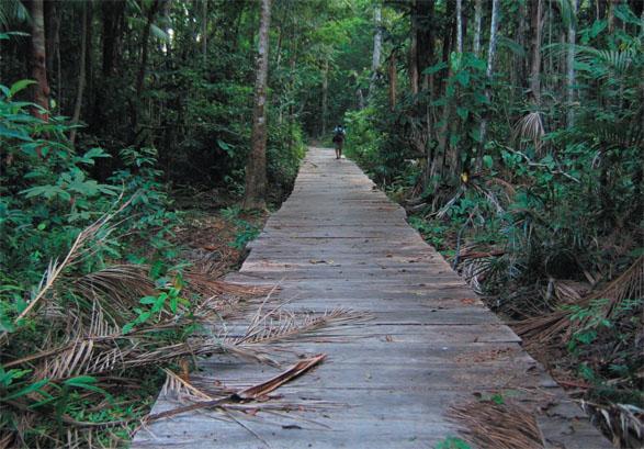 La foresta tra il villaggio di Anã e di Maripá. Santarém, Pará, Brasile. 2005. Foto di Luca Fanelli