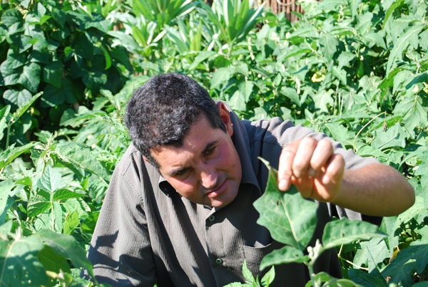 Zé Antonio, a peasant-researcher, looking at a jiló (Solanum gilo) leaf. Photo by: Luca Fanelli
