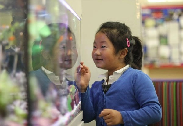 Girl looking at the Lucas Vale fish tank