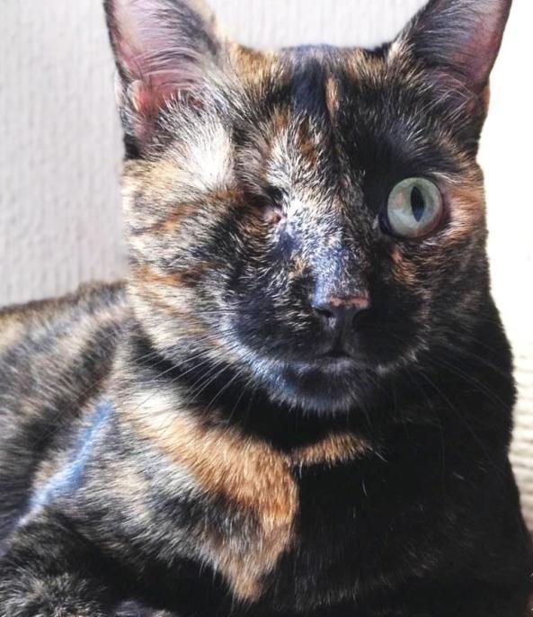 Bernardita con calor (1)