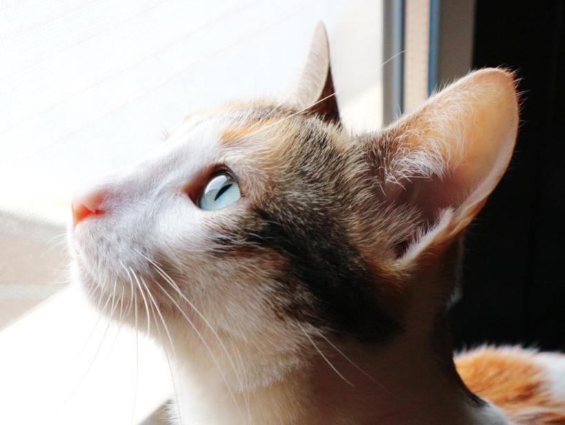 La higiene de los gatos | Best for Pets