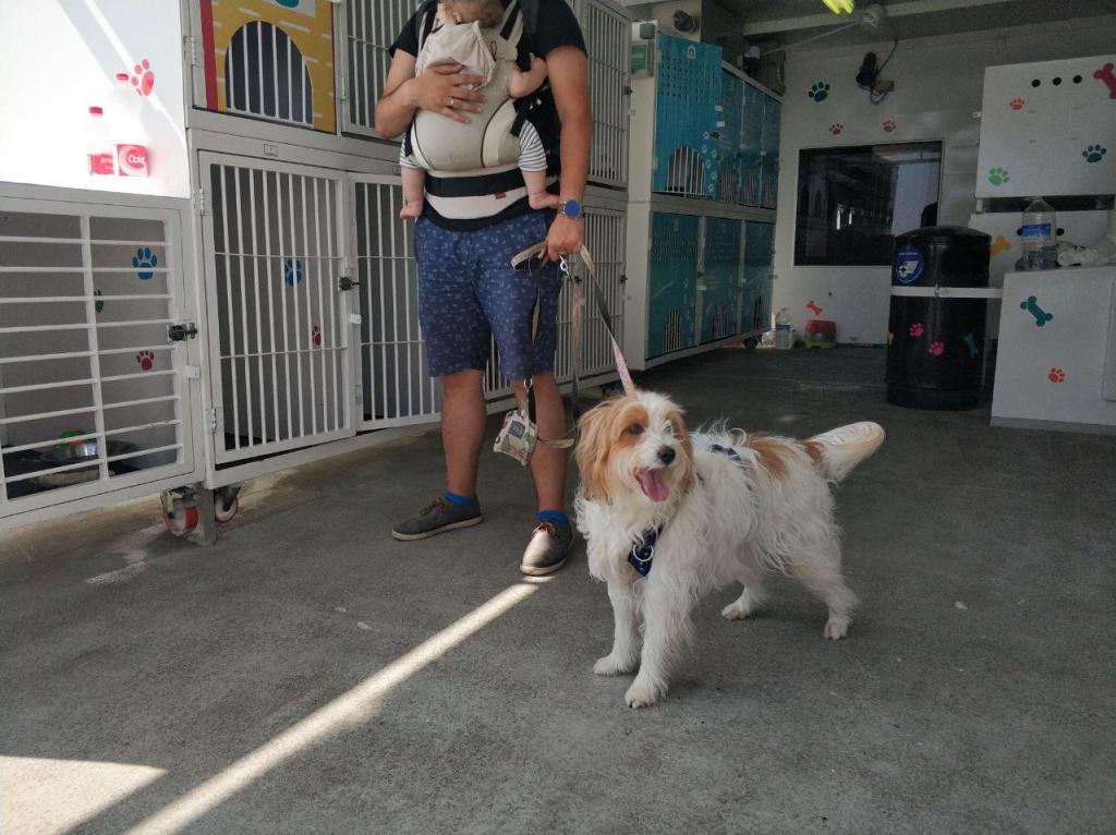 Perro en ferry Balearia