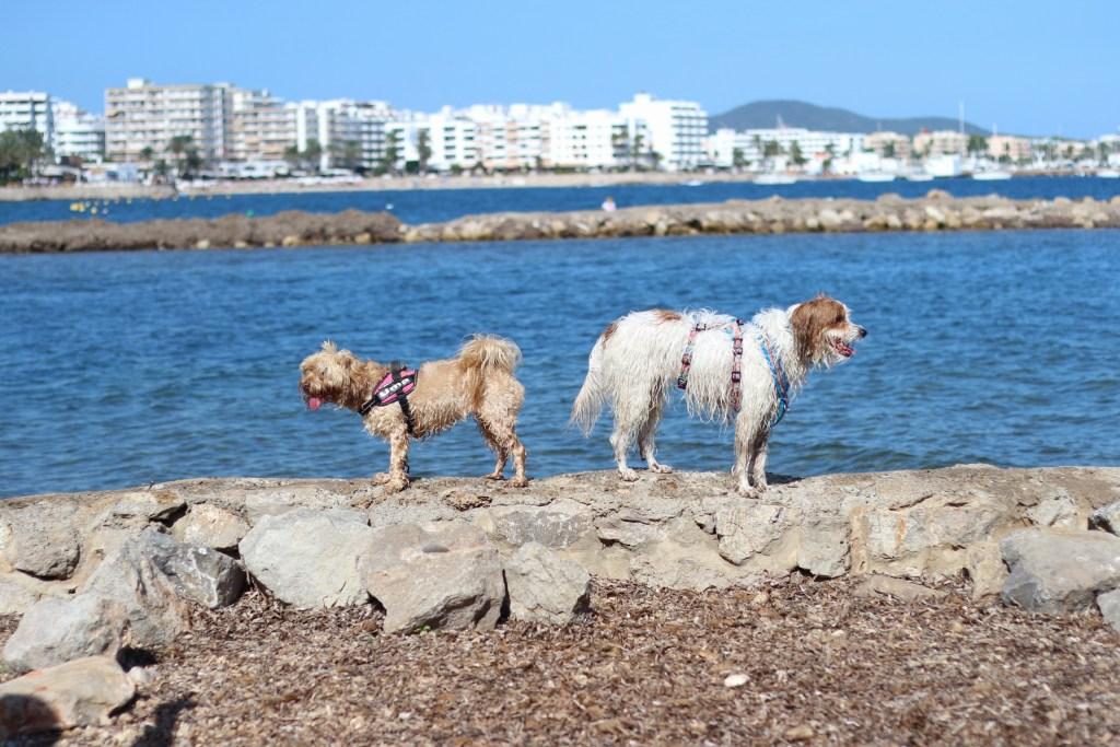 Uma y Lucca en Ibiza