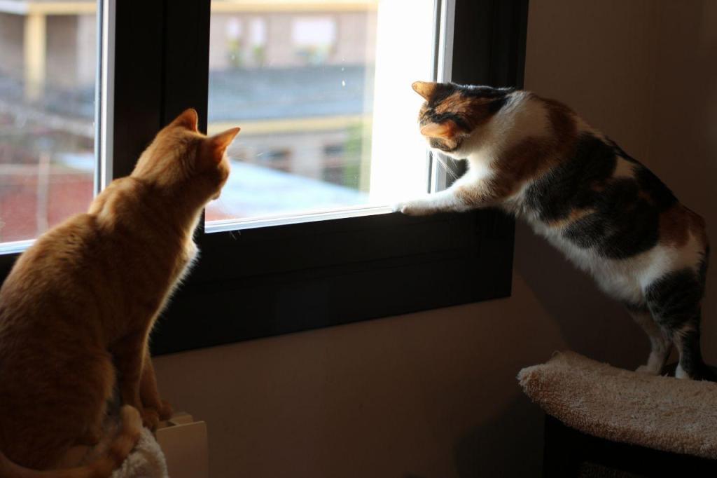 gatos en ventana