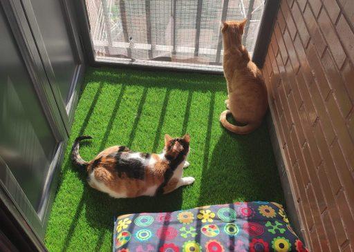 gatos en balcón