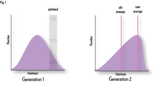 Fig 1 Natural selection