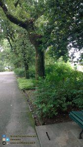copy_9_Santiago de Compostela - Parco Alameda