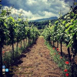 ViniMilo 37a edizione - Vista delle vigne