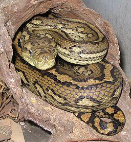 Snake ID app