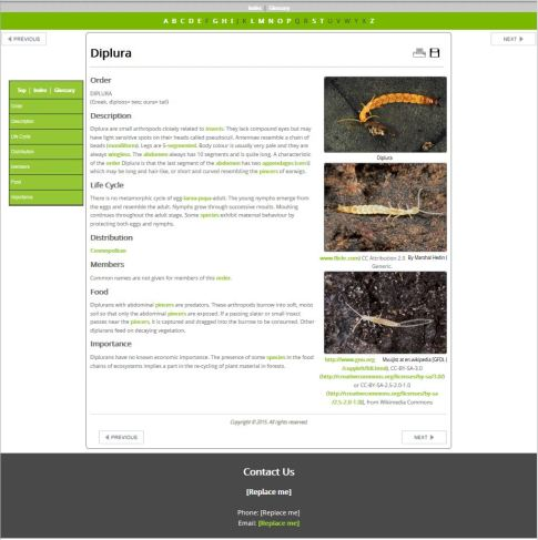 Fancy Green - Images Right Example Fact Sheet (HTML)