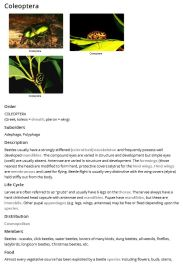 Plain Jane - Images top Fact Sheet (PDF) example