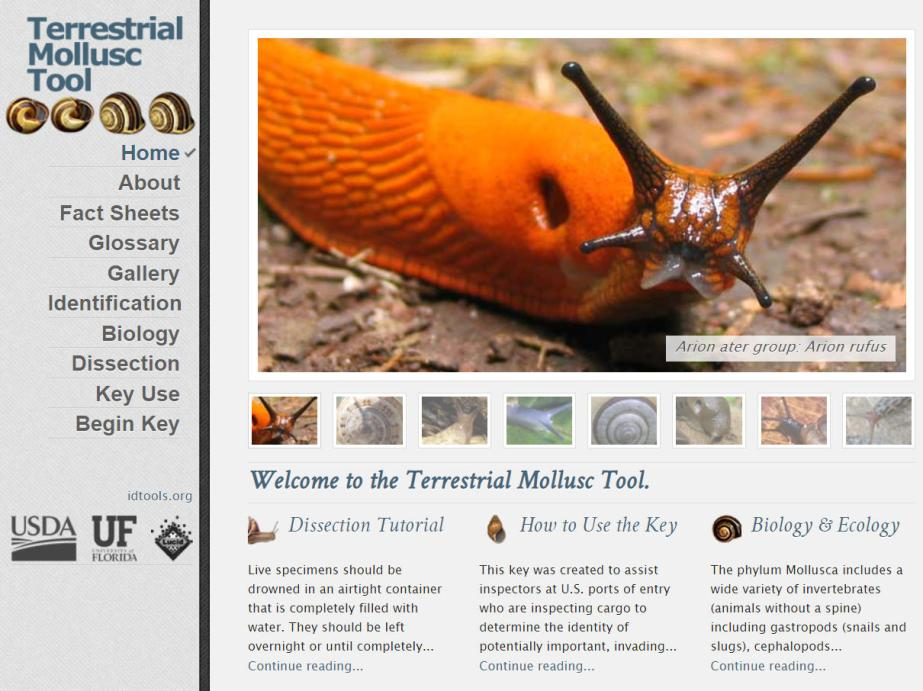 Terrestrial Mollusc website home page