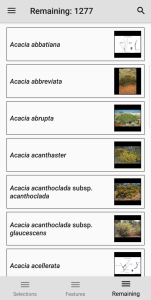 Wattle Acacia of Australia entities remaining screen