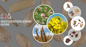 International Seed Morphology Association Seed ID Website