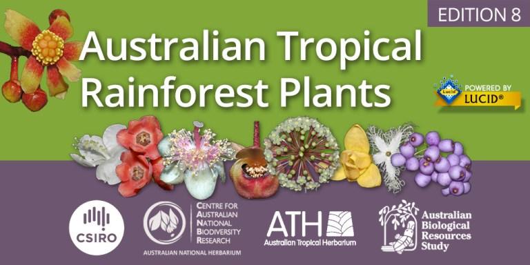 Australian Tropical Rainforest Plants (RFK)