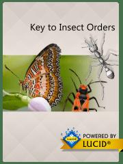 insectorders_splash