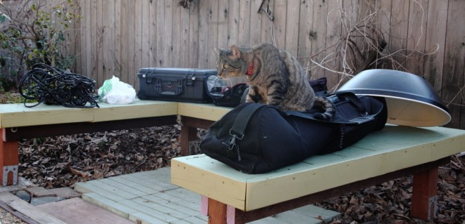 Cat on photo bags