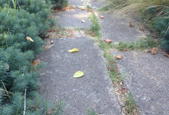 Narrow path paved with urbanite