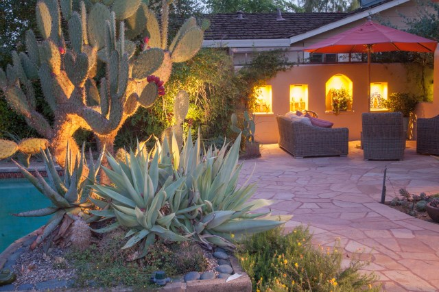 Cactus and niches by night