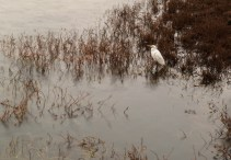 The egret created a transitory focal point, made even more interesting by the knowledge that he would not stay long and would have to be enjoyed while the moment lasted.