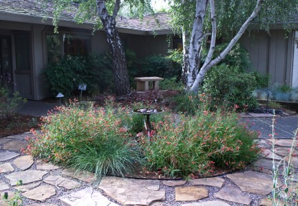 Hummingbird plants (Lobelia) surround the fountain.