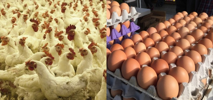 How to start a profitable Poultry Farming in Nigeria