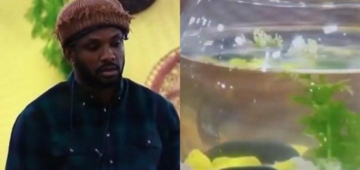 "#BBNaija 2021: ""Till we meet again"" - Cross mourns death of his fish Targaryen Okonkwo (Video)"