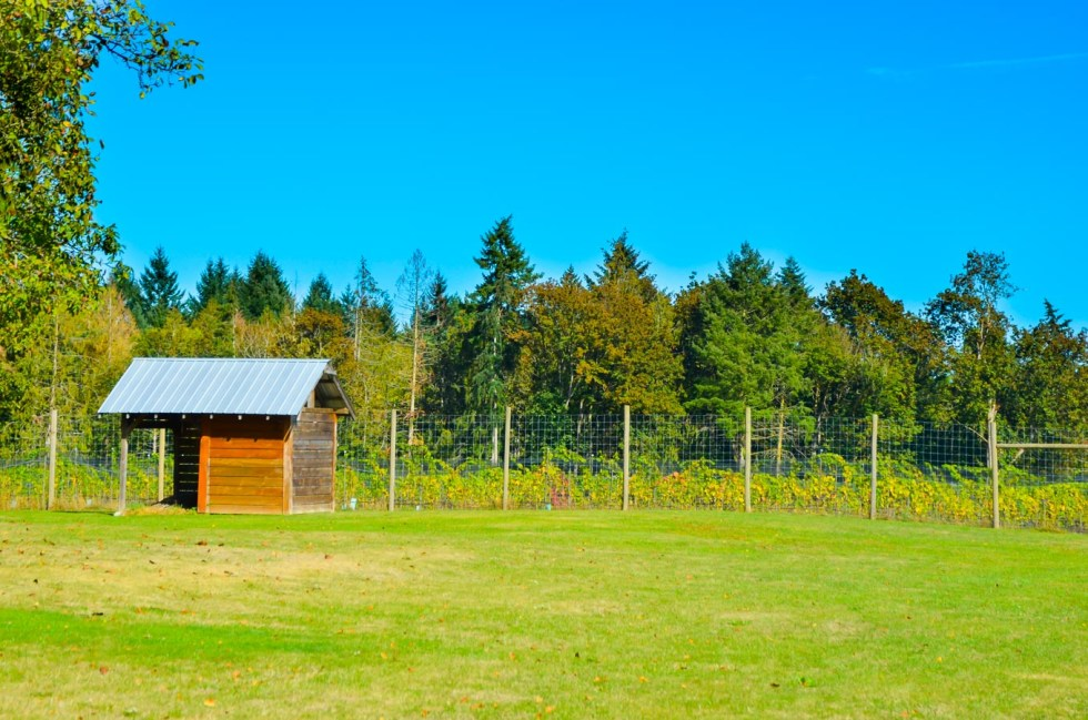 What to Do in Victoria, B.C. Travel Guide   Unsworth Winery