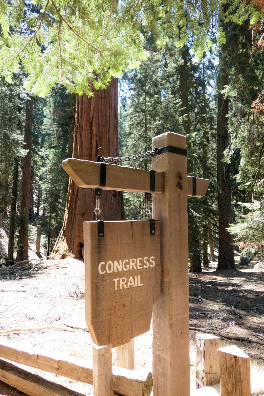Congress Trail at General Sherman in Sequoia National Park General Guide