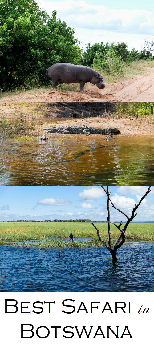 Best Botswana Safari Photos. Chobe National Park Day Trip from Victoria Falls Review. #africa #botswana #safari #safaris #travel #travelblog #travelblogger #lpworldtravels