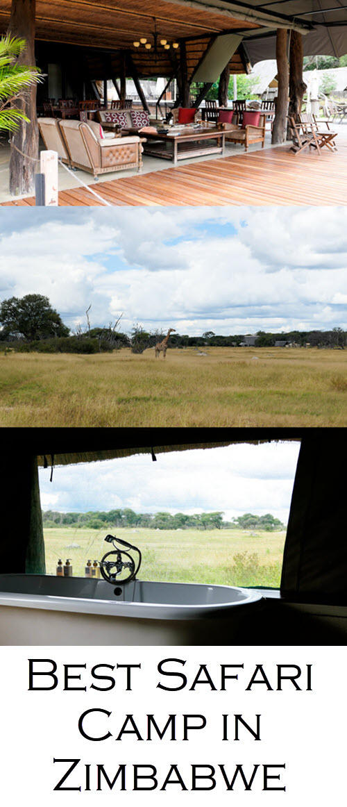 Best Safari Camp in Zimbabwe. Where to Stay in Hwange National Park - The Hide Photo Review. #africa #zimbabwe #hwange #zim #southafrica #traveblo #safari #safaris #travelblogger #blogger #lpworldtravels