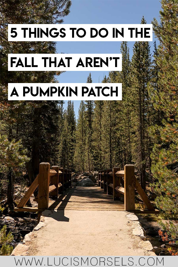 5 things to do in fall that arent a pumpkin patch. You'll love these unique ideas for fall activities. Be more eco-friendly and have more fun this fall!