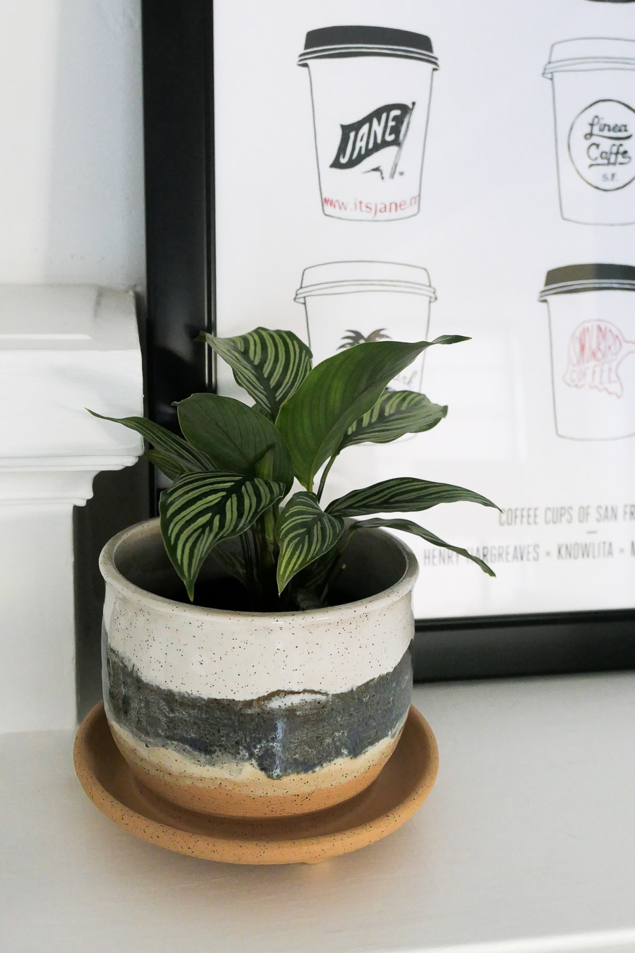 Winter Break + Lessons Learned - indoor plant