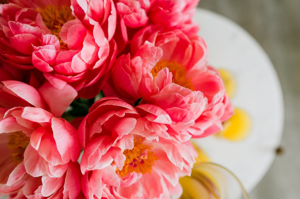 Pink Peonies in Bloom