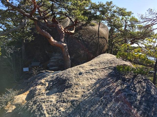 弥三郎岳への道4