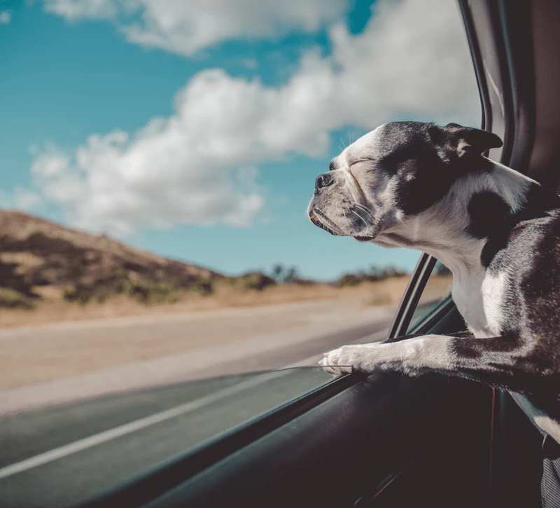 Budget-Friendly Tips to Keep Traveling With Your Dog Problem-Free