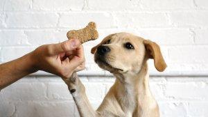 dog treats, dog training, dog walking - Luck Dogs Pet Sitting