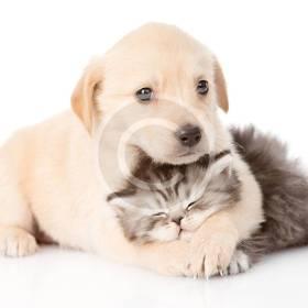 pets10.jpg