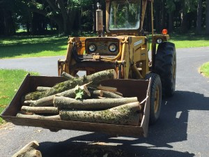 Cleaning up a downed tree using the loader.