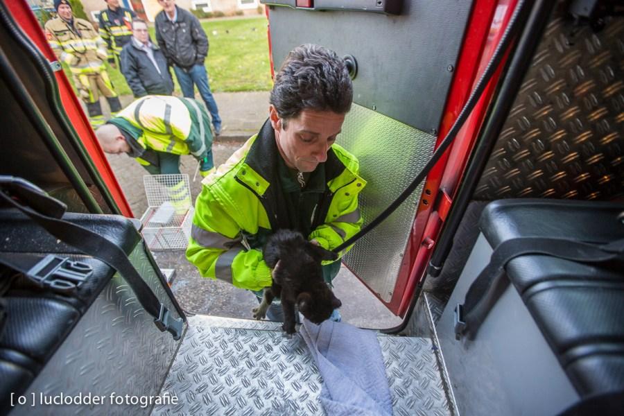 De brandweer en dierenambulance deden weer goede daden, hier werd een kat gered uit een flat met binnenbrandje.